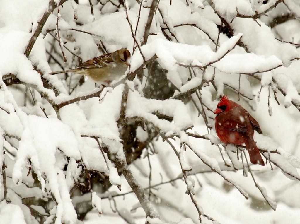 frozen%20birds_zpsupzsrzi5.jpg