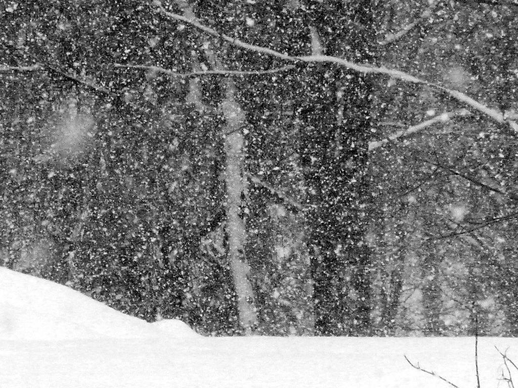 FZ200_winter_storm_gater_004_Medium_-001.JPG