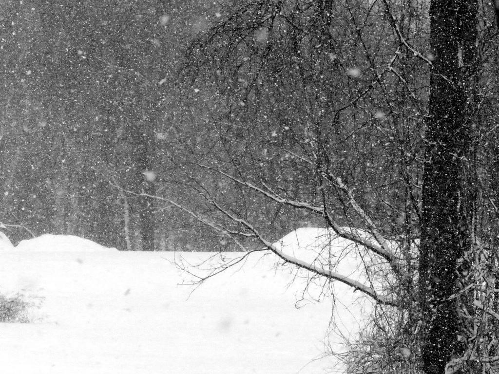 FZ200_winter_storm_gater_006_Medium_-001.JPG