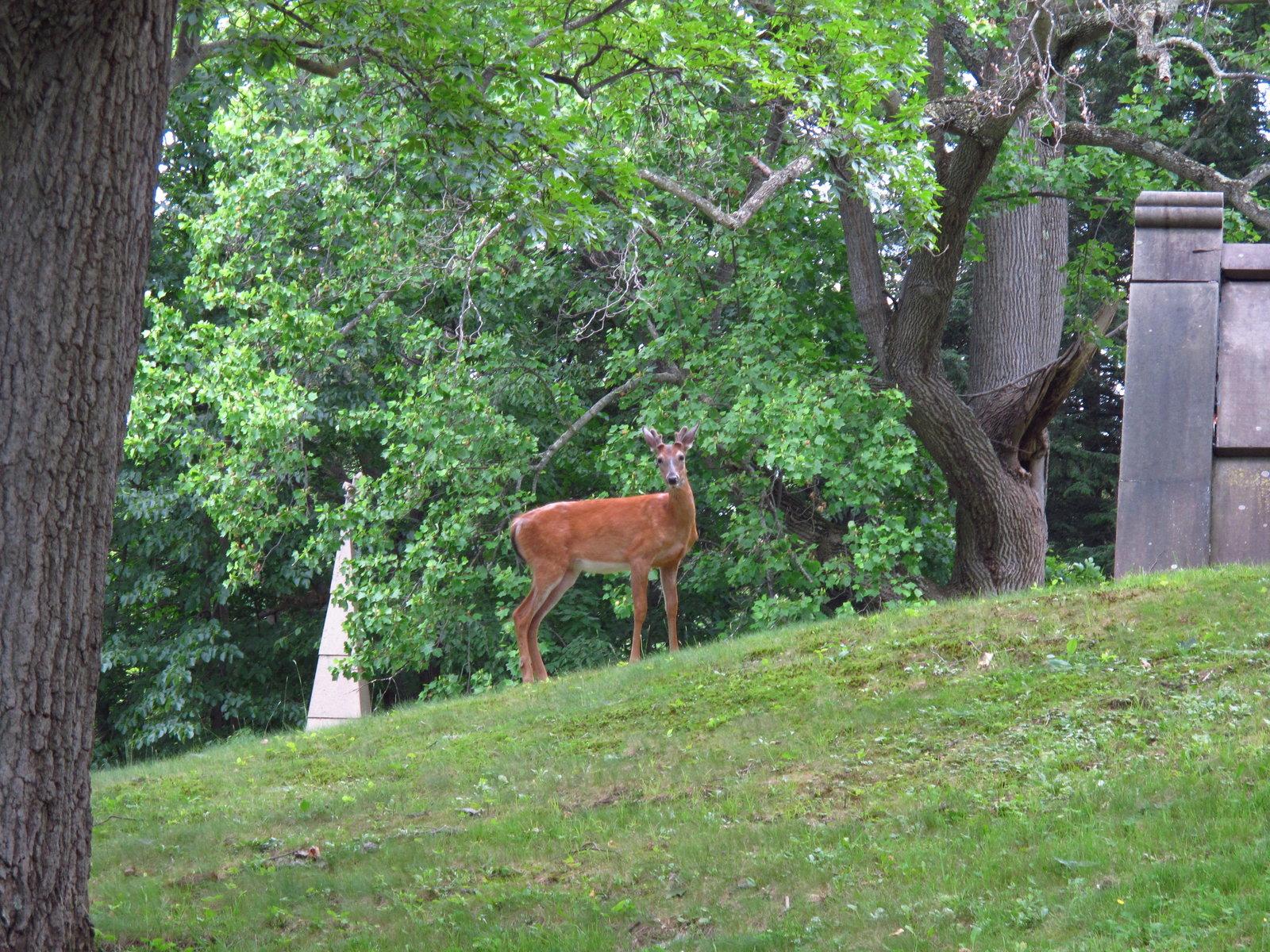 G12 deer and skies oakwood 004.JPG