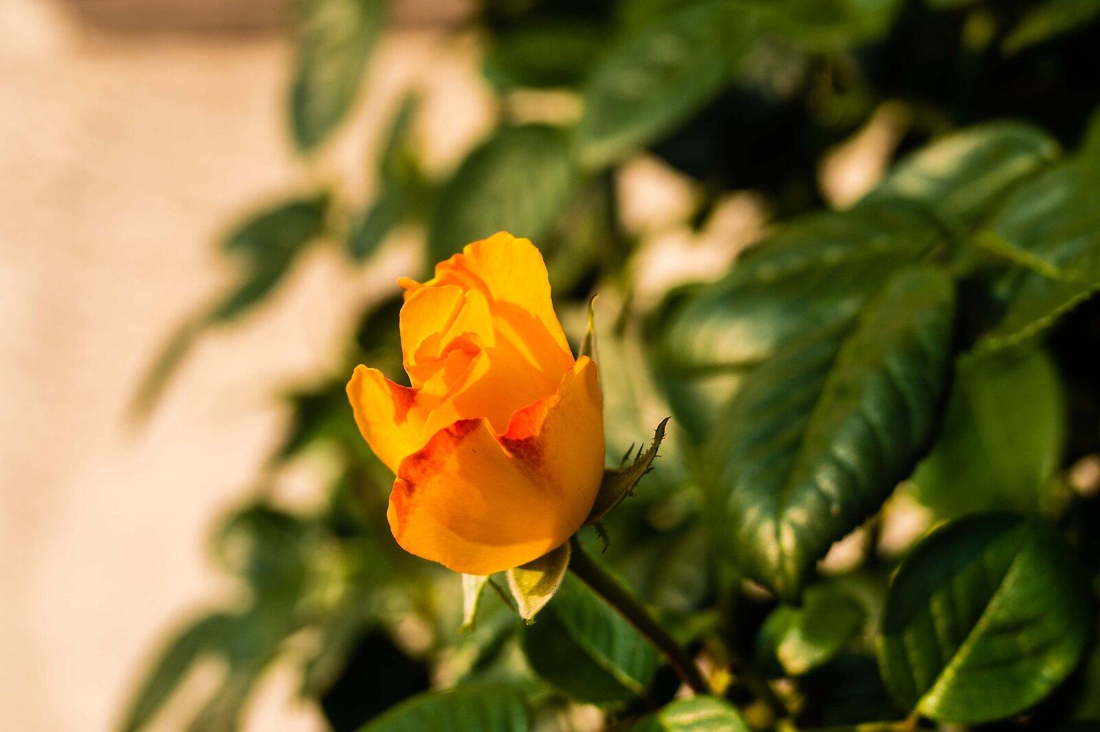 Gelbe R.jpg