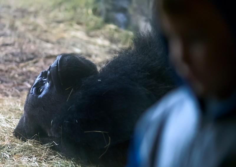 gorilla%26boy-L.jpg