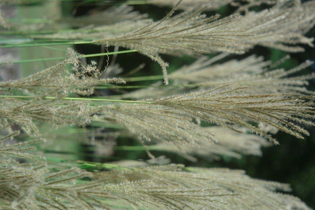 grass_f4.jpg