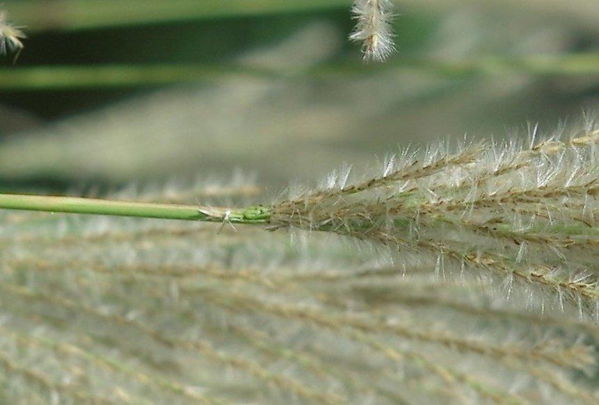 grass_f4_crop.jpg