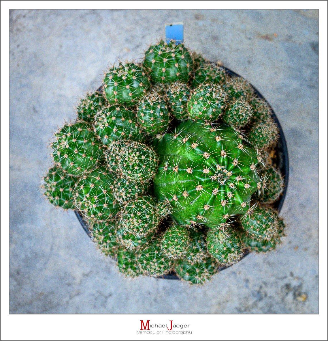 green cactus-1-3.jpg