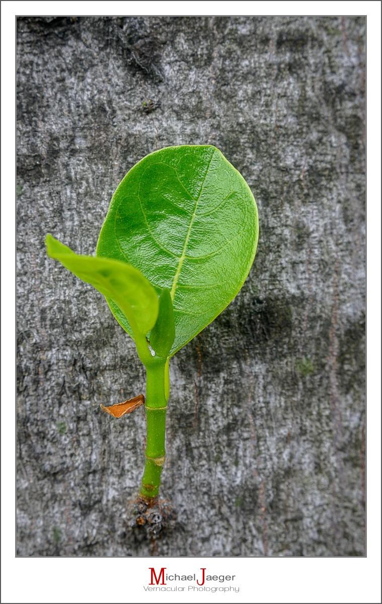green-leaf-1.jpg