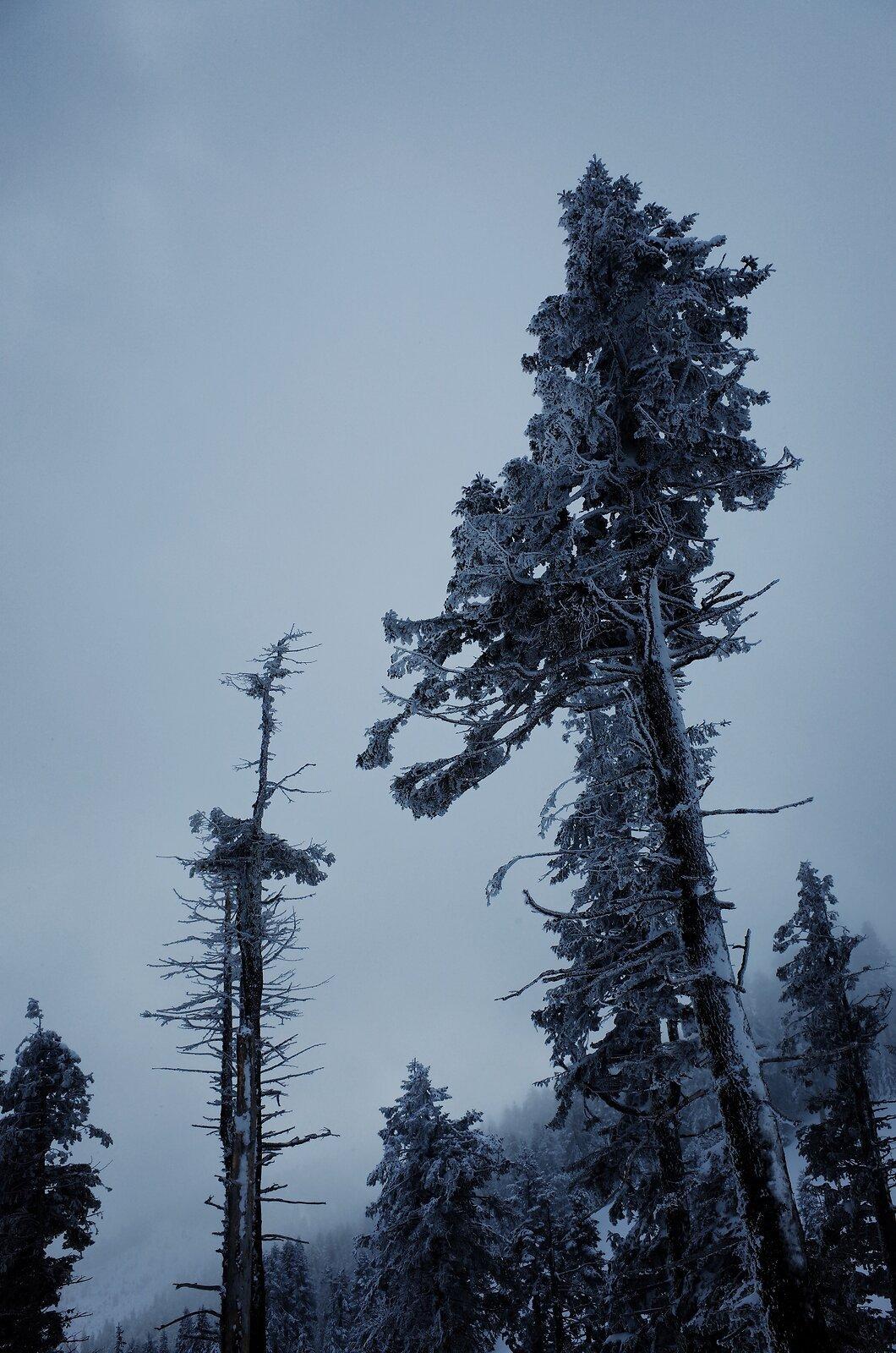 GRII_Feb20_32_Winter_Trees_Mt_Ashland.jpg