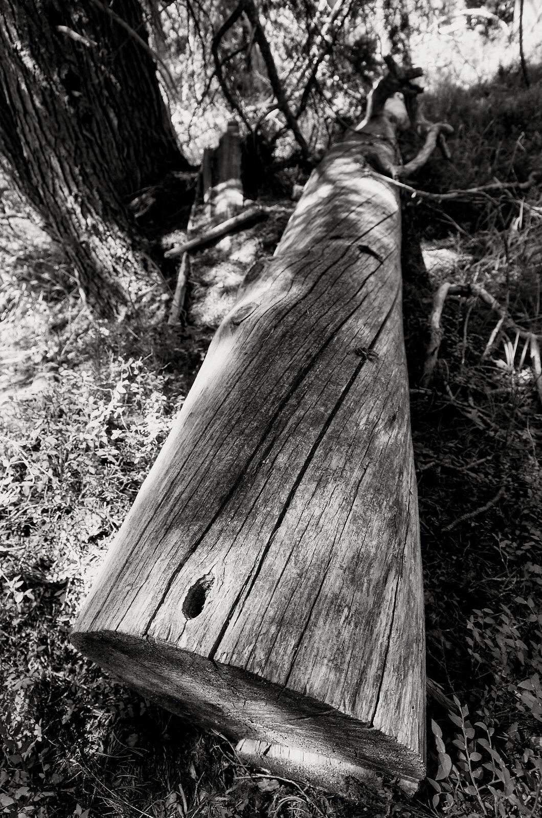 GRII_July17_Fallen_Tree_DiamondLake(SilverEfex).jpg
