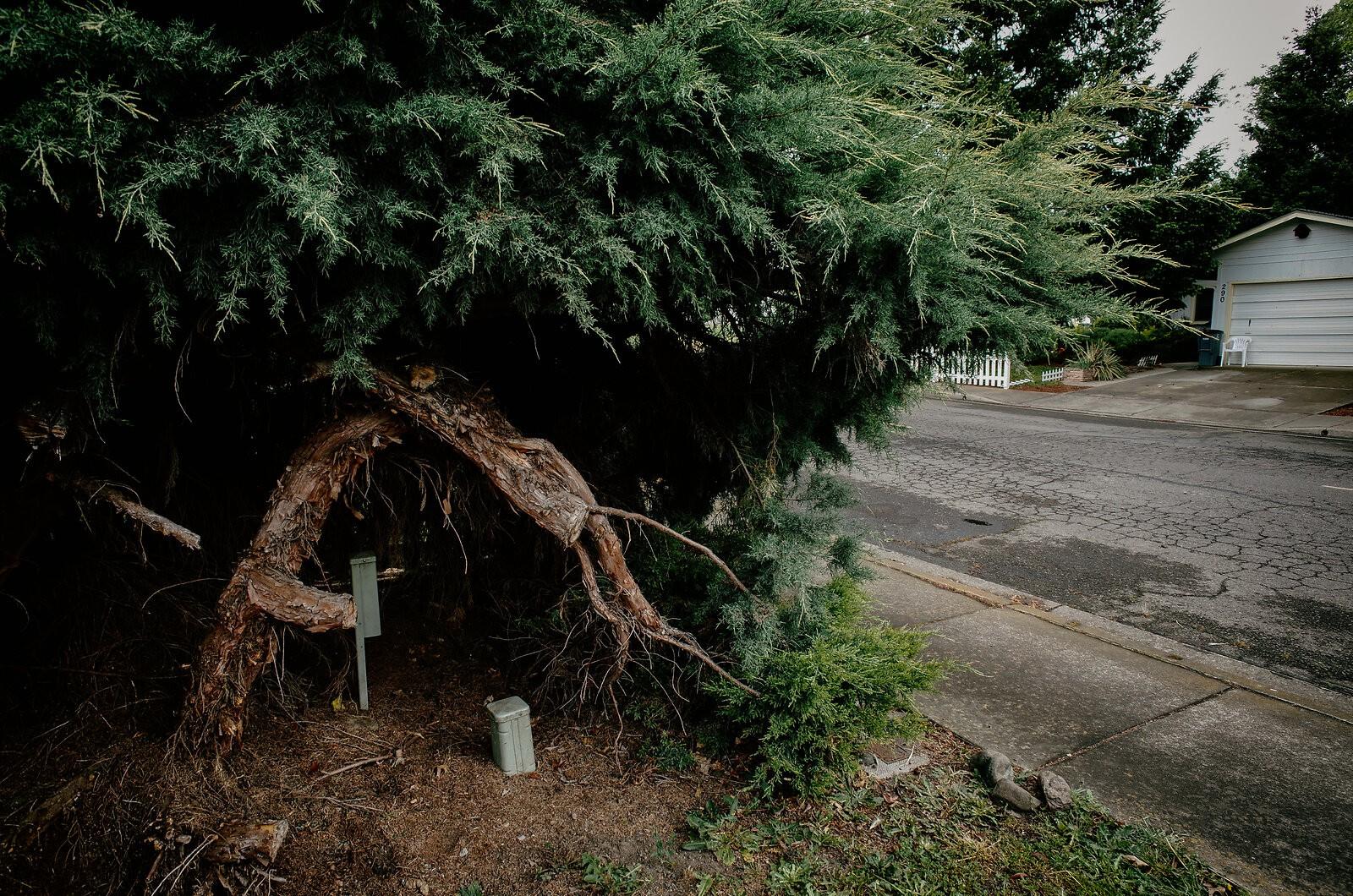 GRII_May14_Suburban_trees.jpg