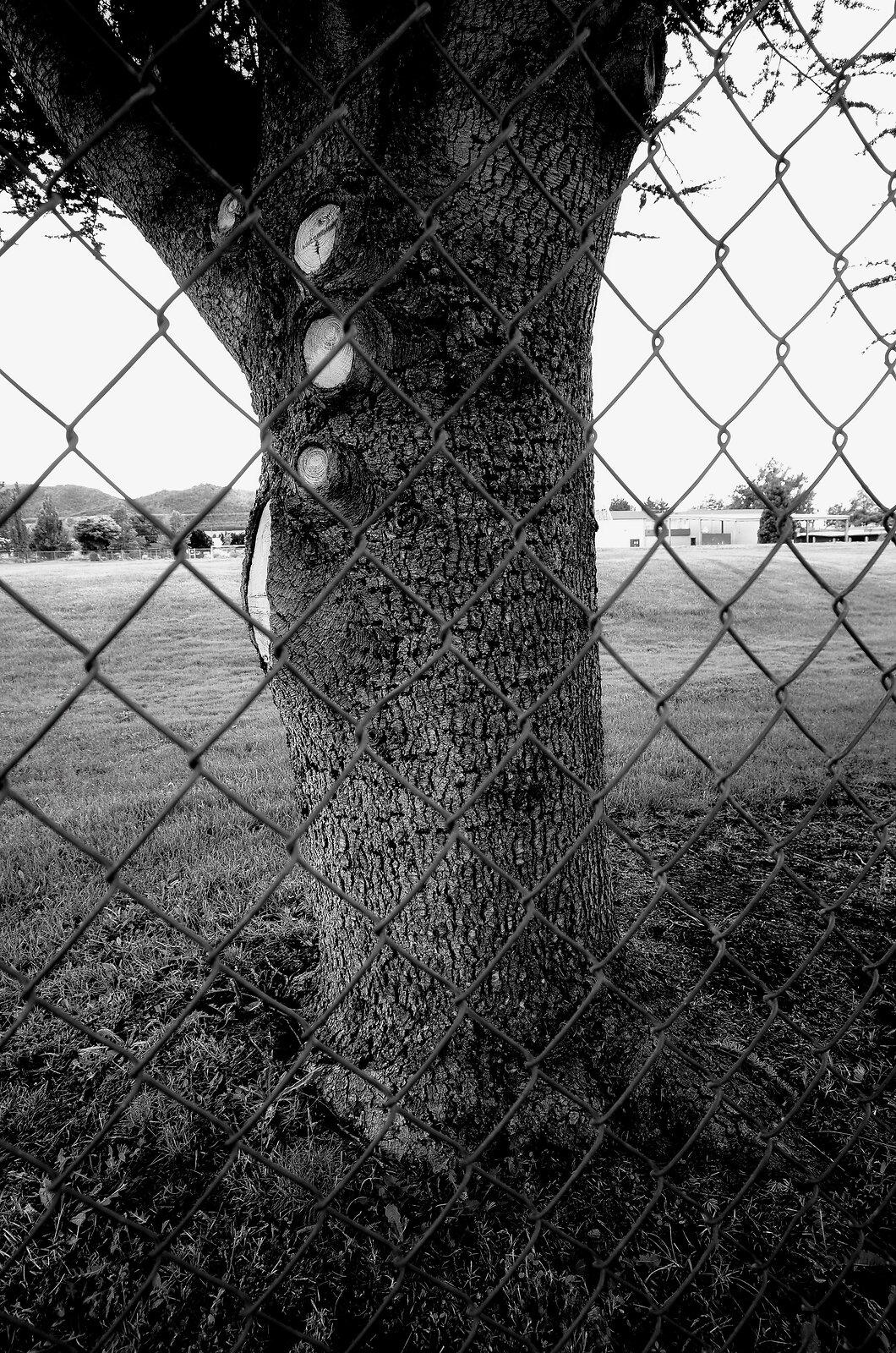 GRII_May14_Tree_Prisoner.jpg