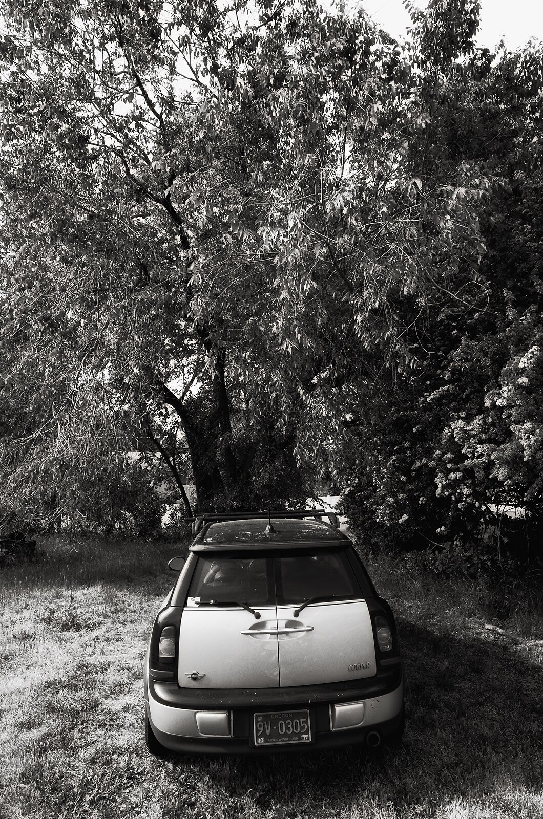 GRII_May25_Mini_under_trees.jpg