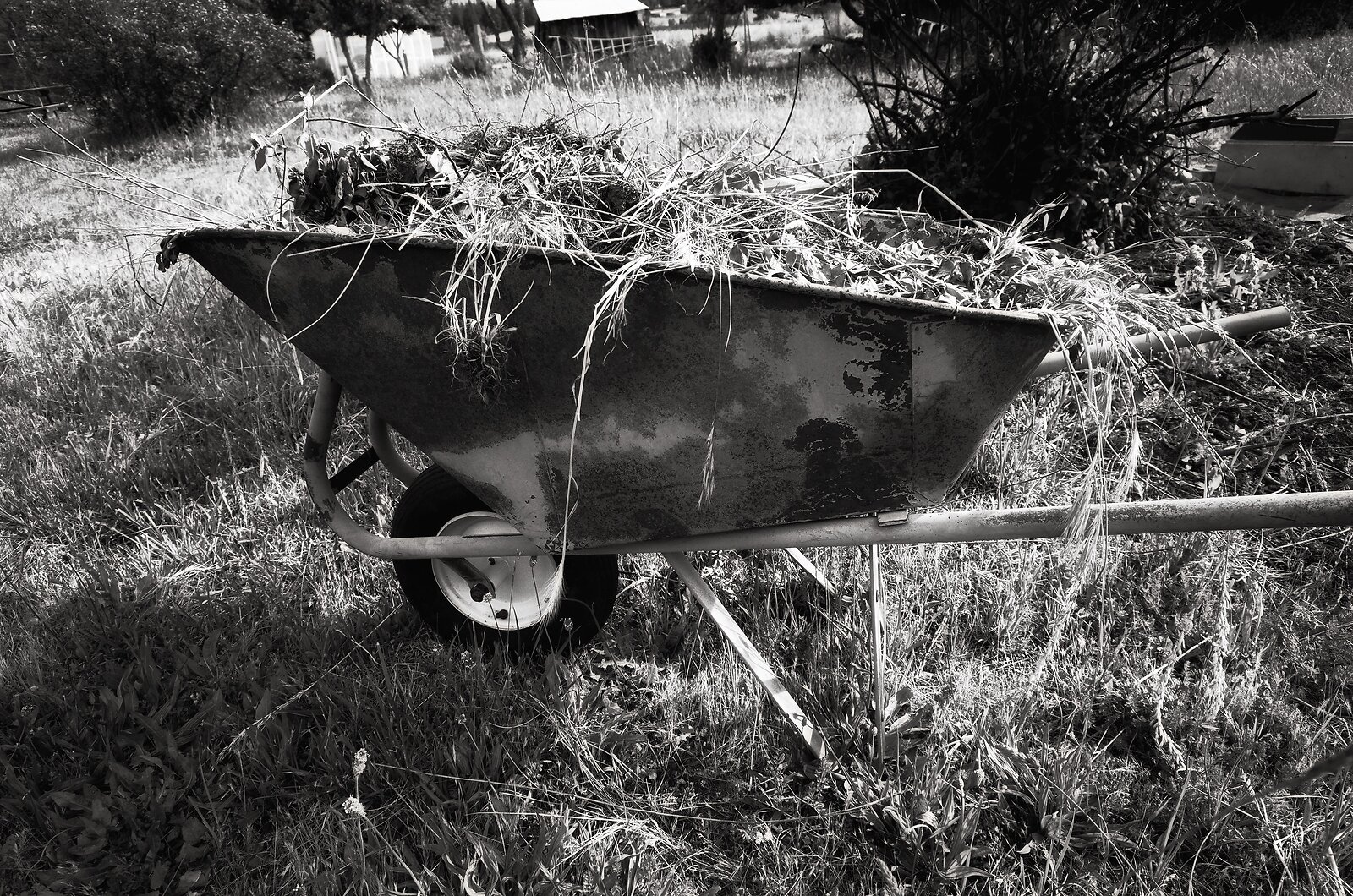 GRII_May25_Wheelbarrow#1.jpg