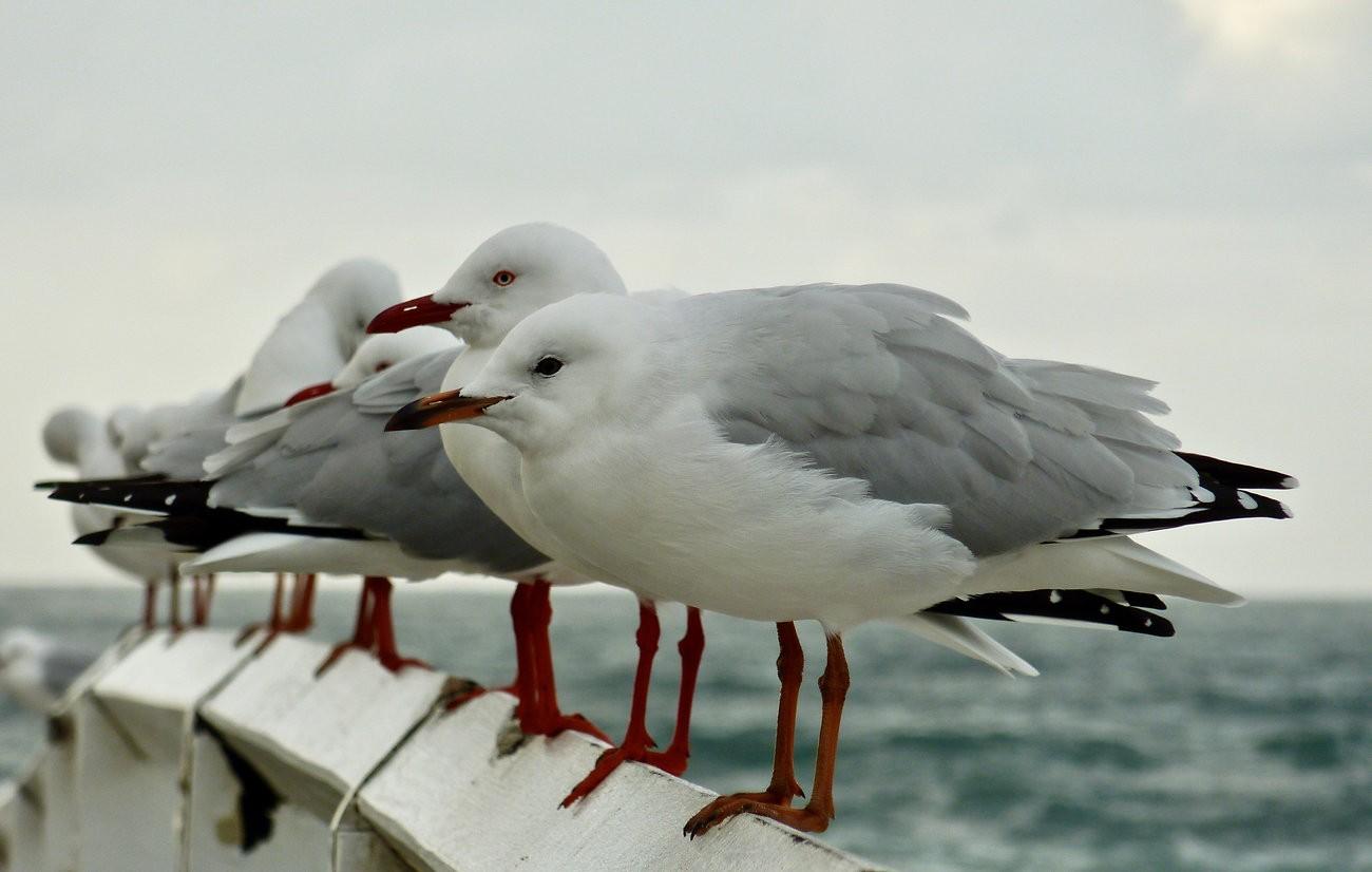 gulls1.jpeg