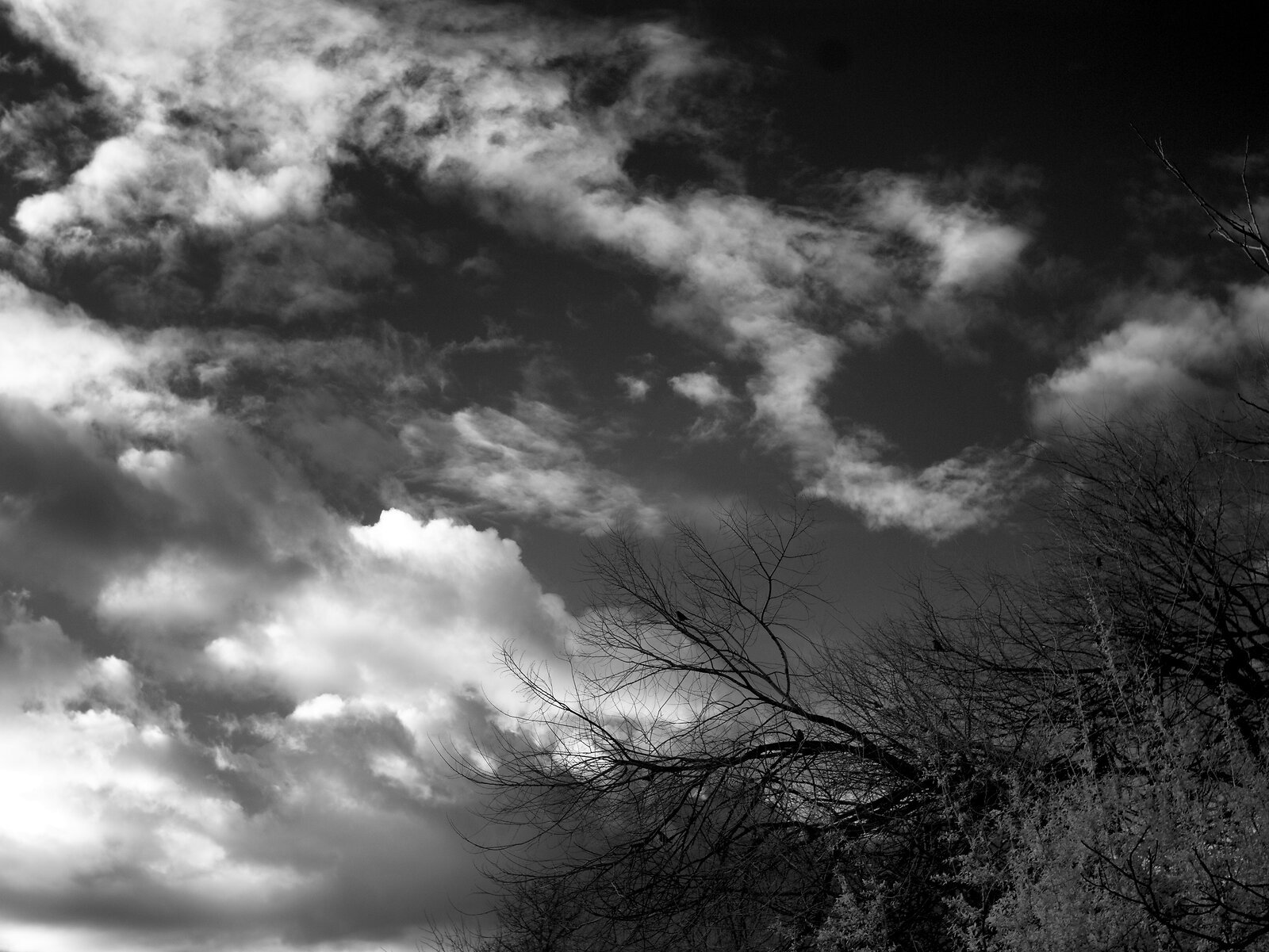 GX1_Jan25_21_Clouds&Trees(IR).jpg