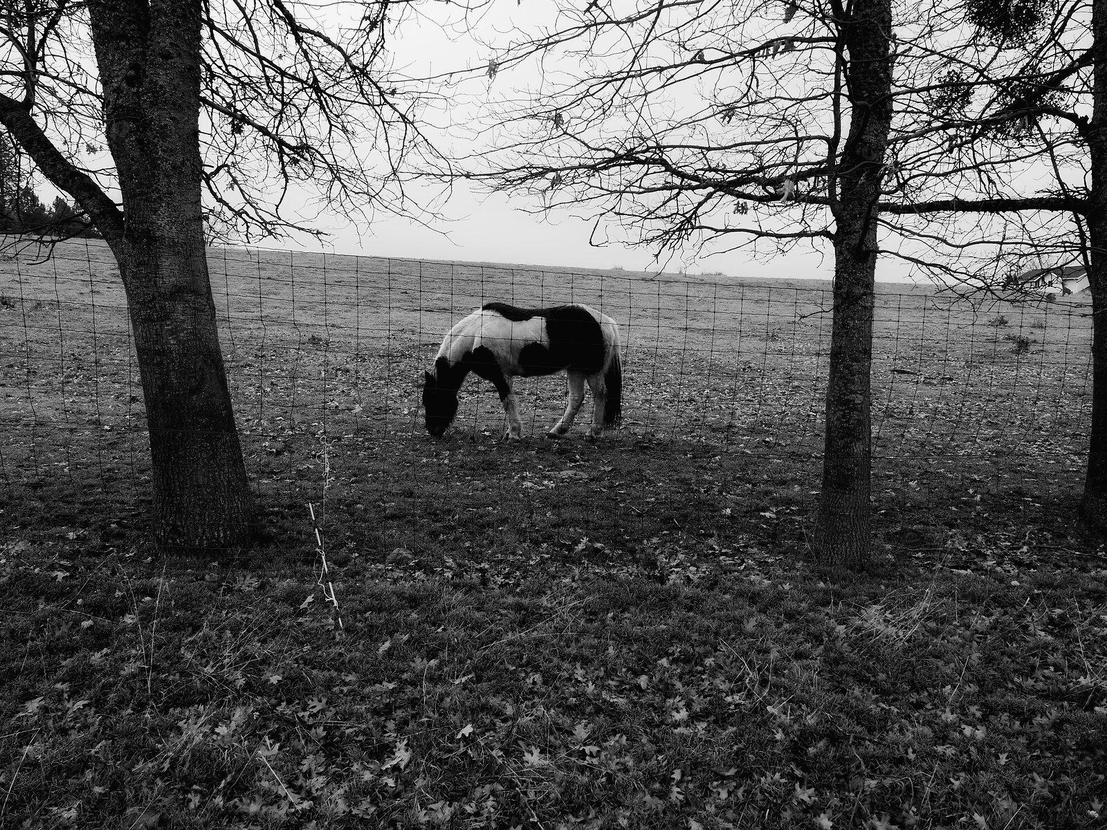 GX8_Jan18_21_horse+trees.jpg