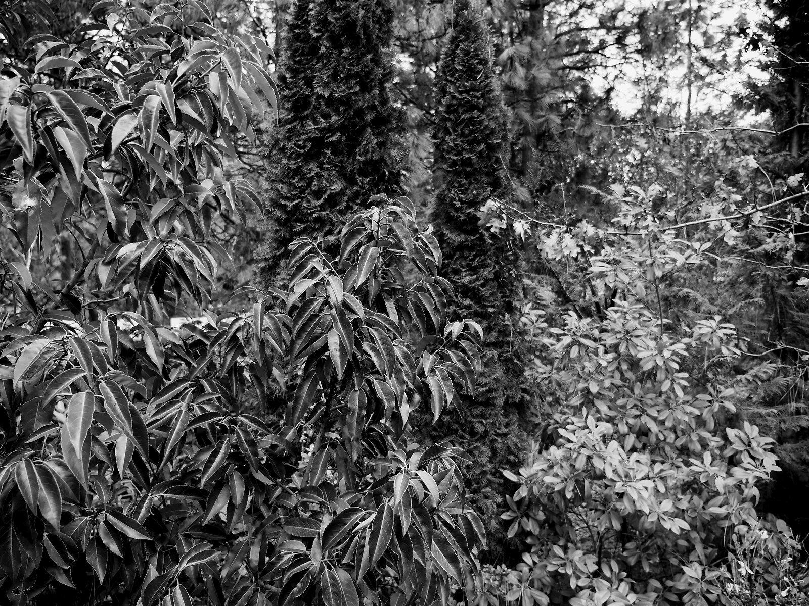 GX8_Jan18_21_leaves.jpg