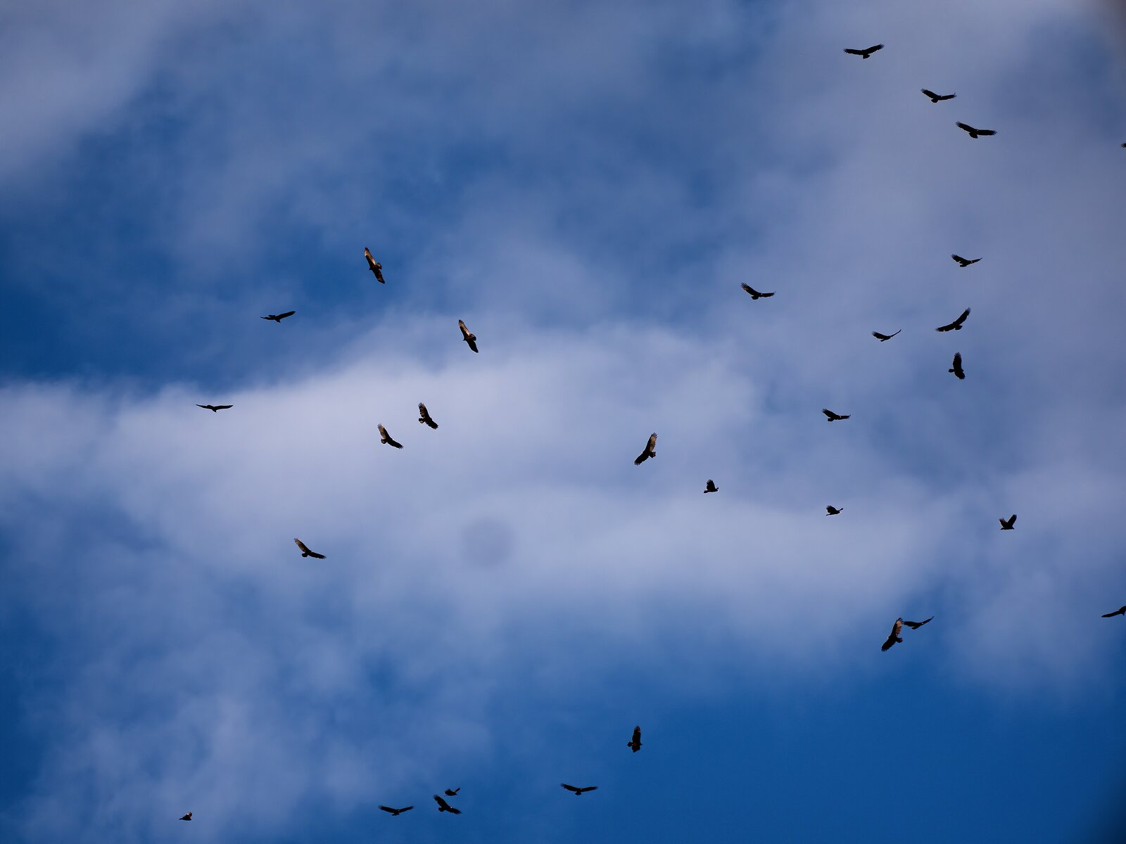 GX8_Sept26_Turkey_Vultures#1.jpg