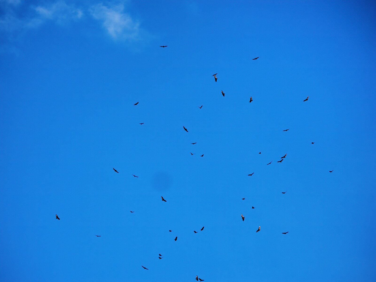 GX8_Sept26_Turkey_Vultures#5.jpg