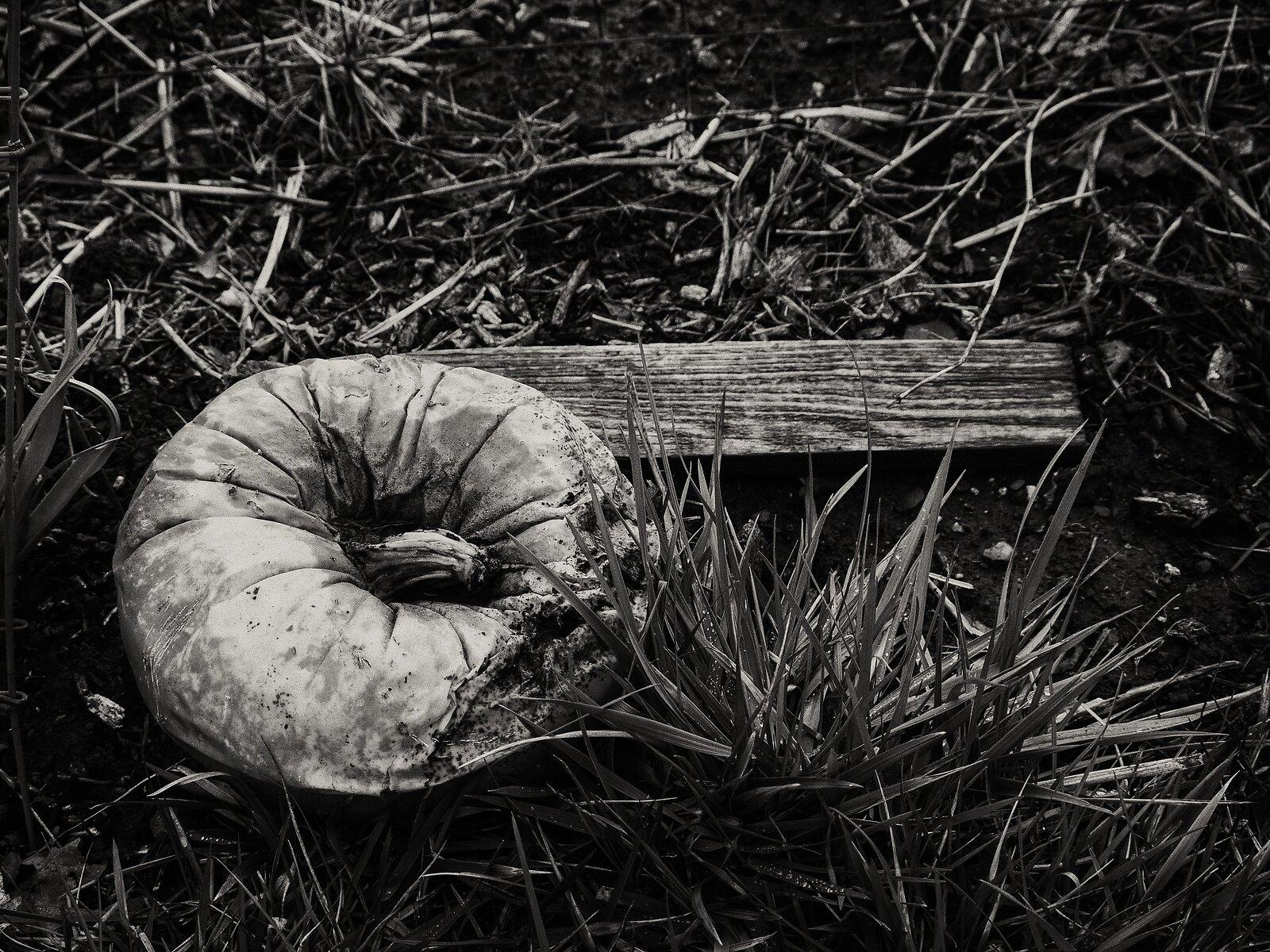 GX9_Feb18_21_rotting_pumpkin.jpg