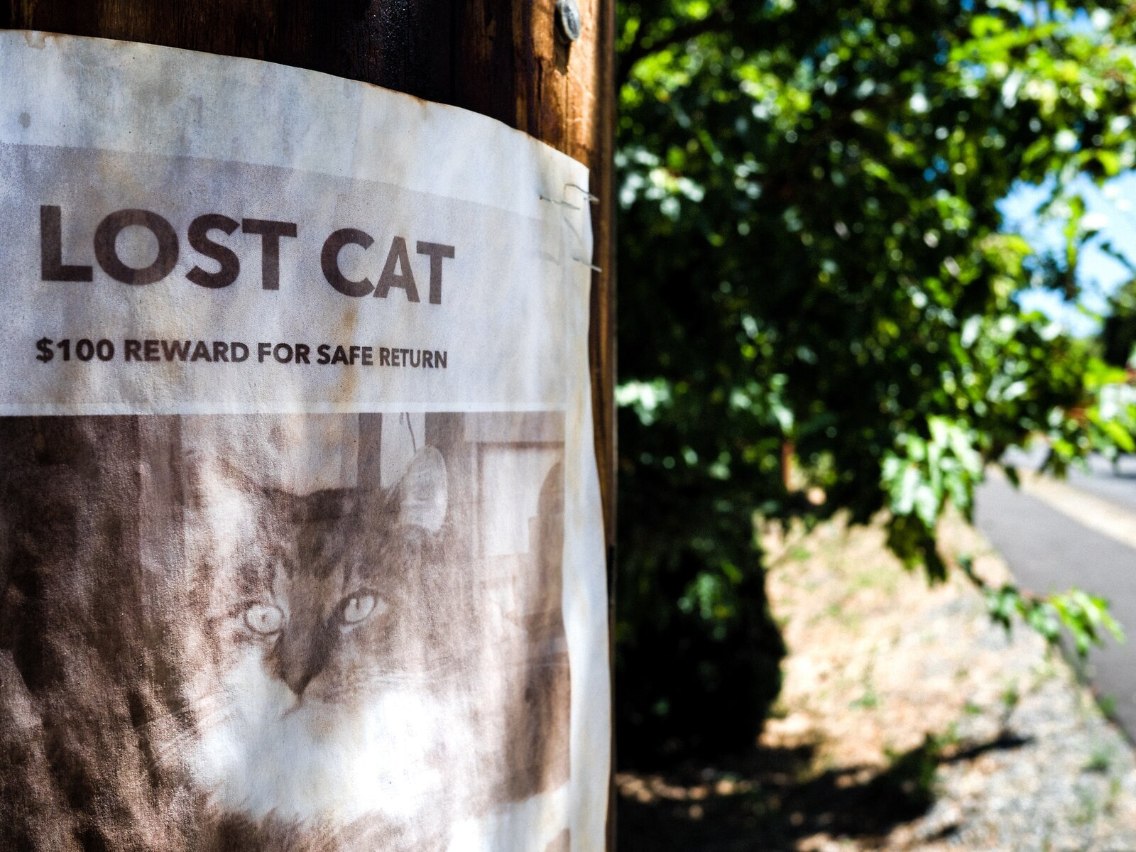 GX9_Jun23_21_Lost_Cat(superia).jpg