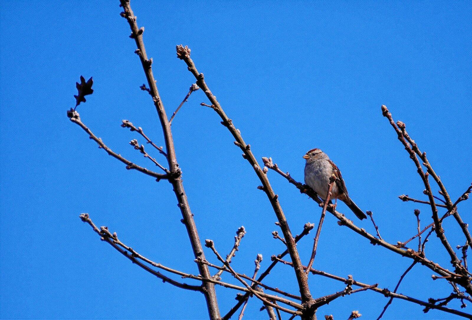 GX9_Mar6_21_Bird#1.jpg