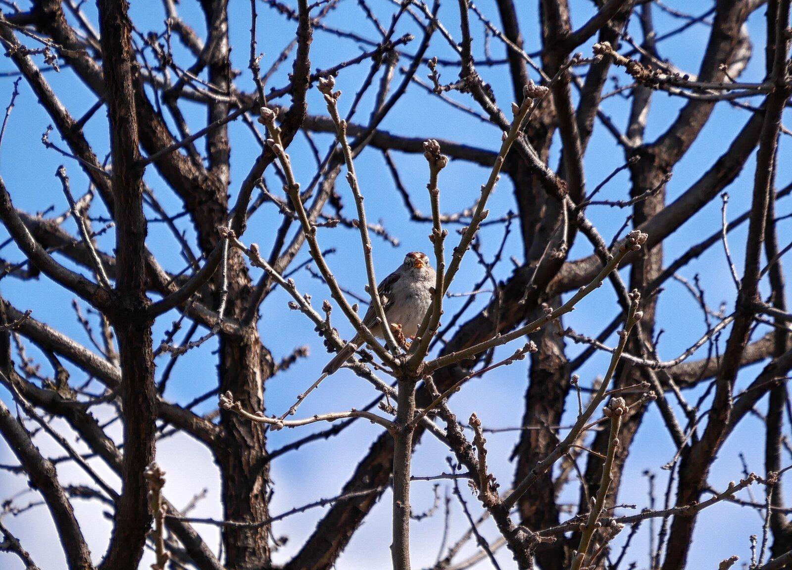 GX9_Mar6_21_Bird#2.jpg