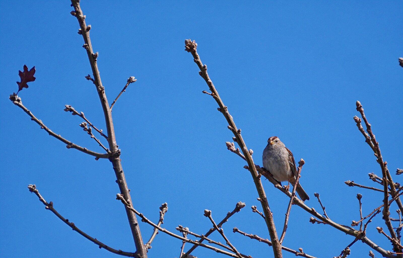 GX9_Mar6_21_Bird#3.jpg