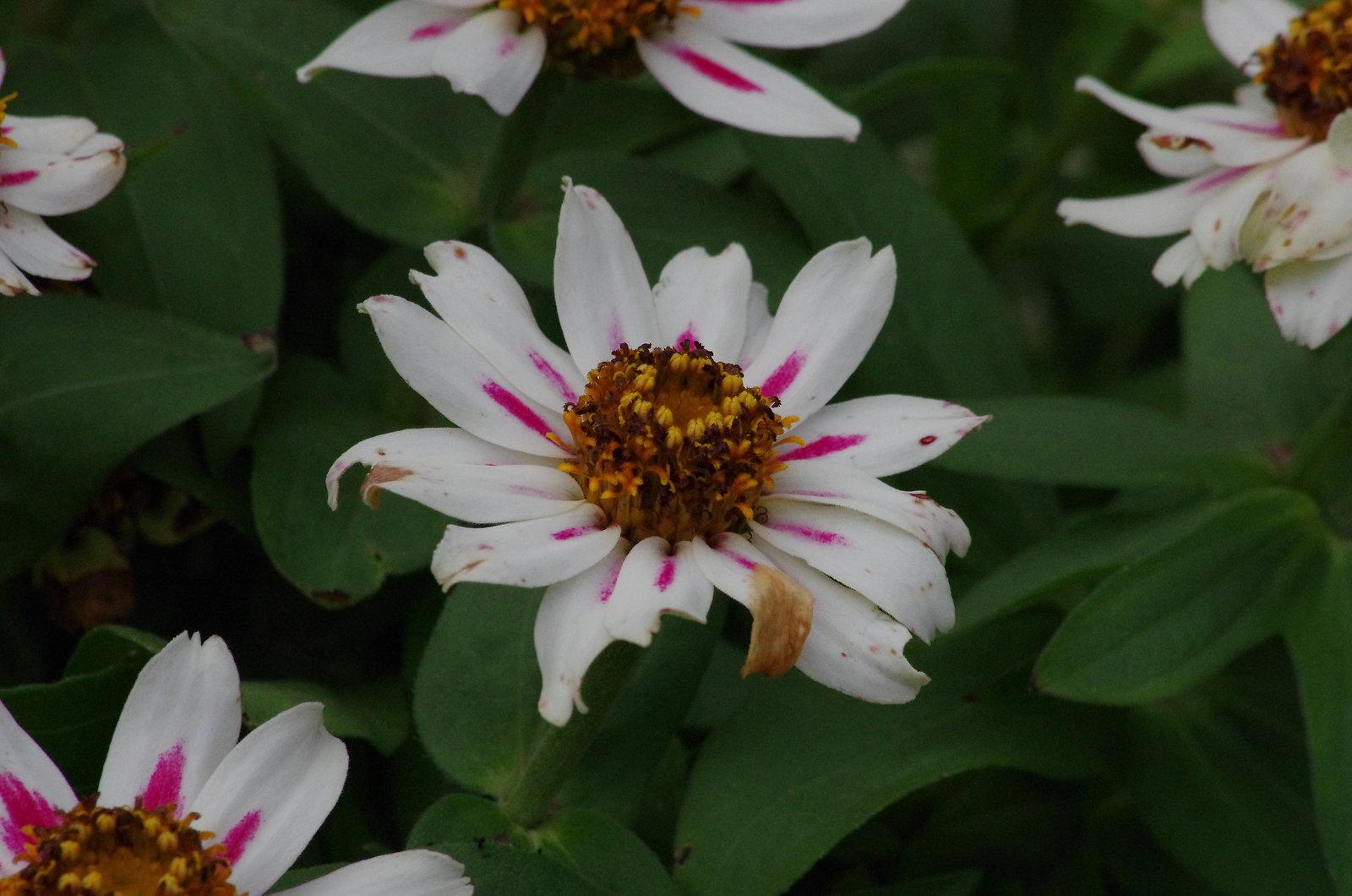 hawk on cross flowers 029.JPG