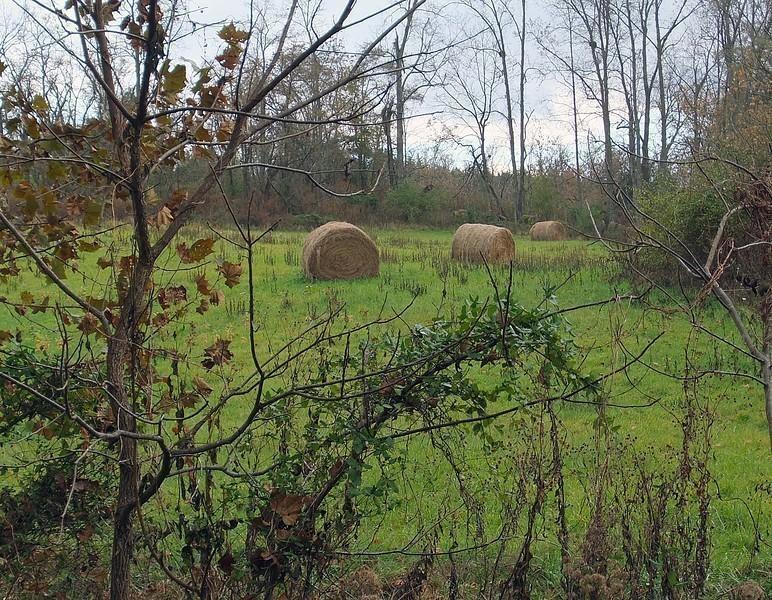 haystacks-L.jpg