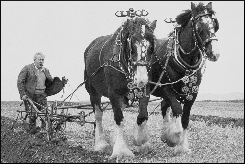 Horse ploughing team.jpg