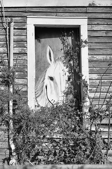 Horse-Window.jpg