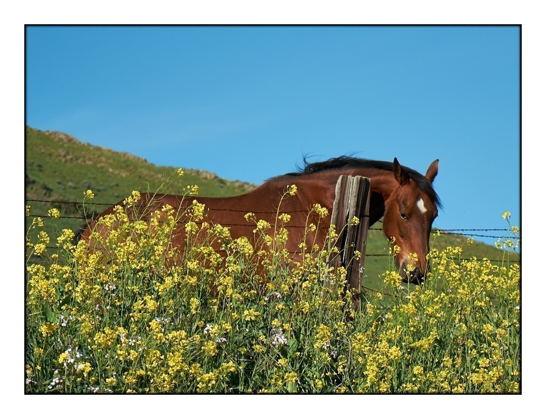 HorseandMustard2.jpg