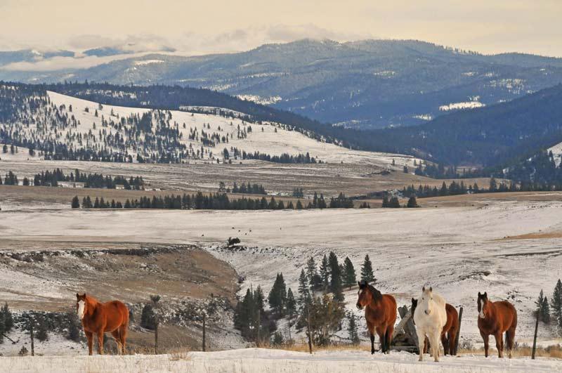 Horses-on-ridge-winter.jpg