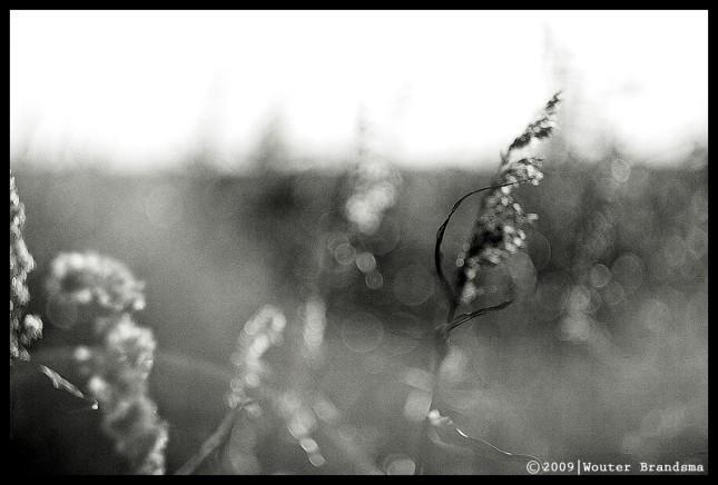 in-the-light-7.jpg