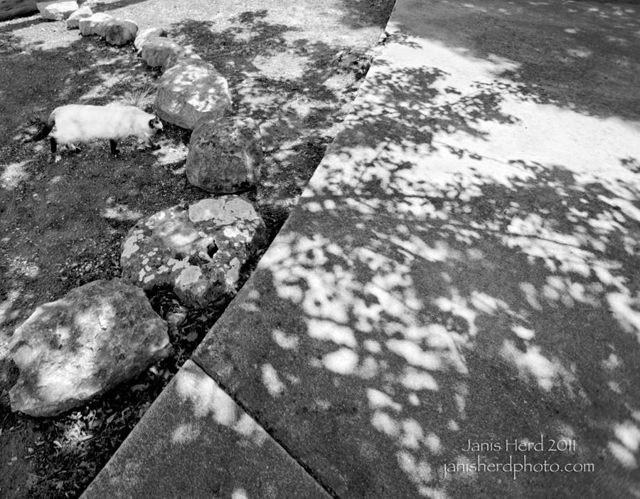 isabel-shadow_DSC2926bw-w3.jpg
