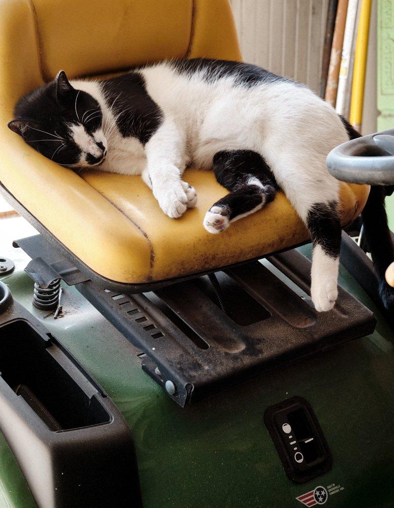 Jingles on mower seat.jpg