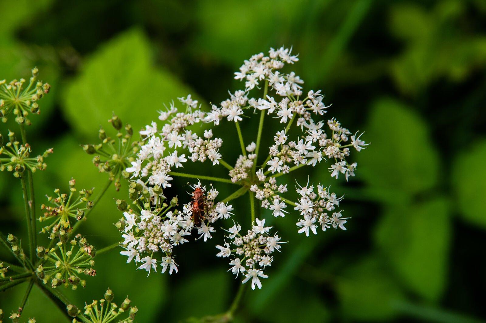 Käfer auf weiss.jpg