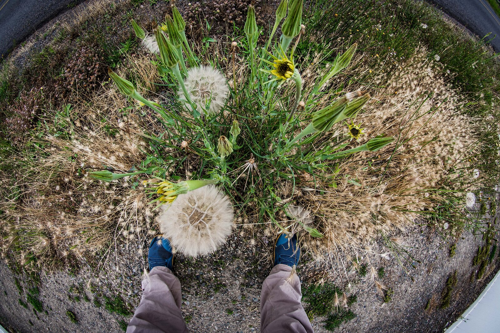 KP_June15_Fisheye_Feet.jpg