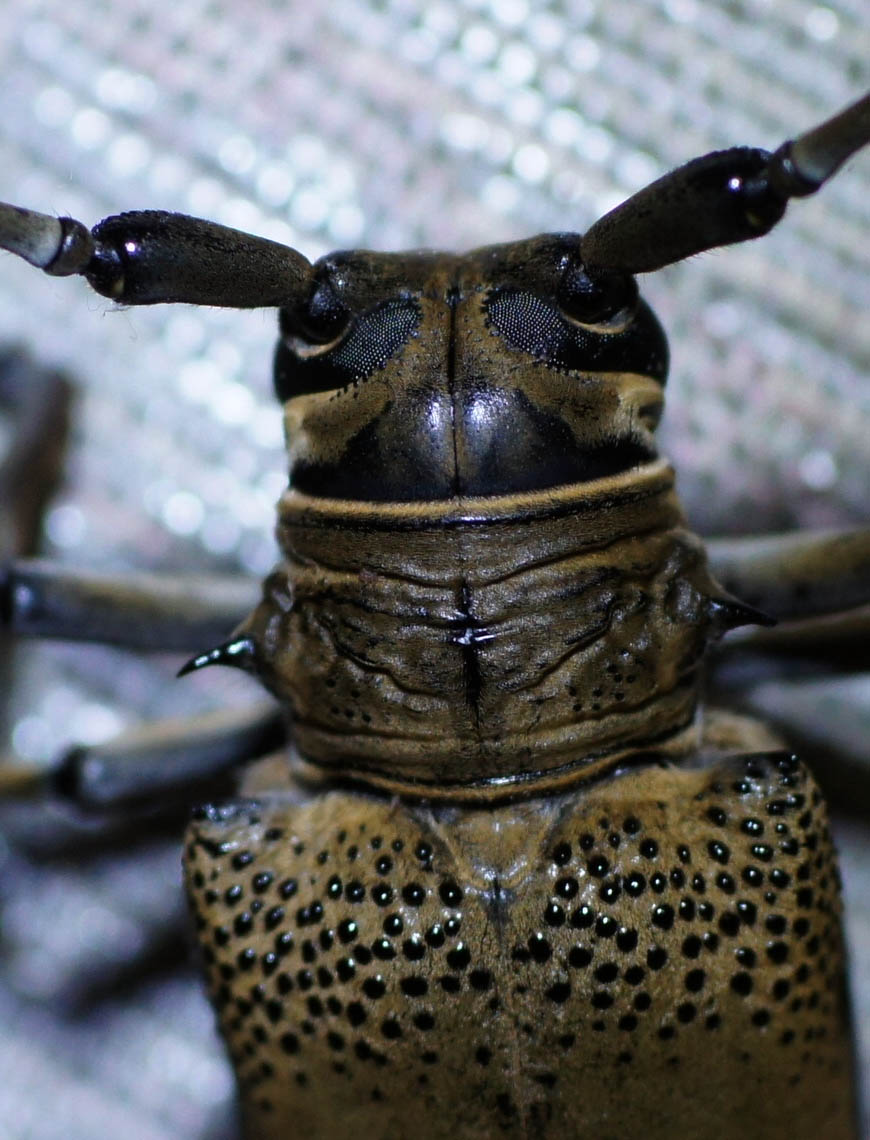 kumbang.jpg