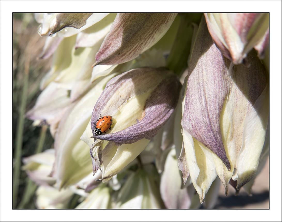 Lady bugL1000244.jpg