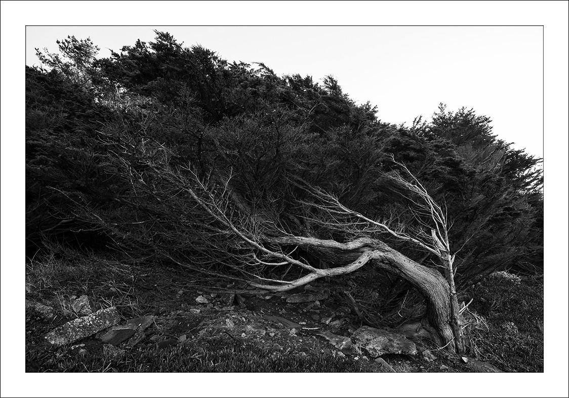 Lands-End-Tree.jpg