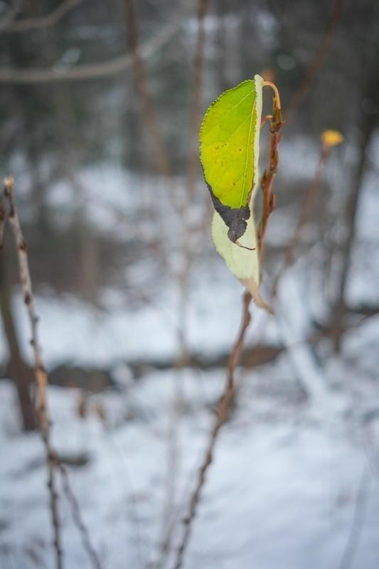 Last Leaf (1 of 1).jpg