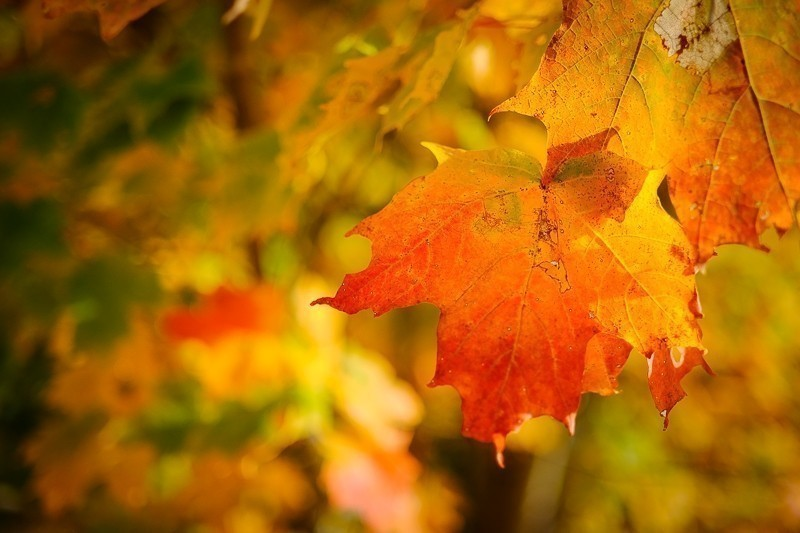 Leaf (1 of 1).jpg