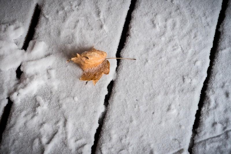 Leaf in the Snow (1 of 1).jpg