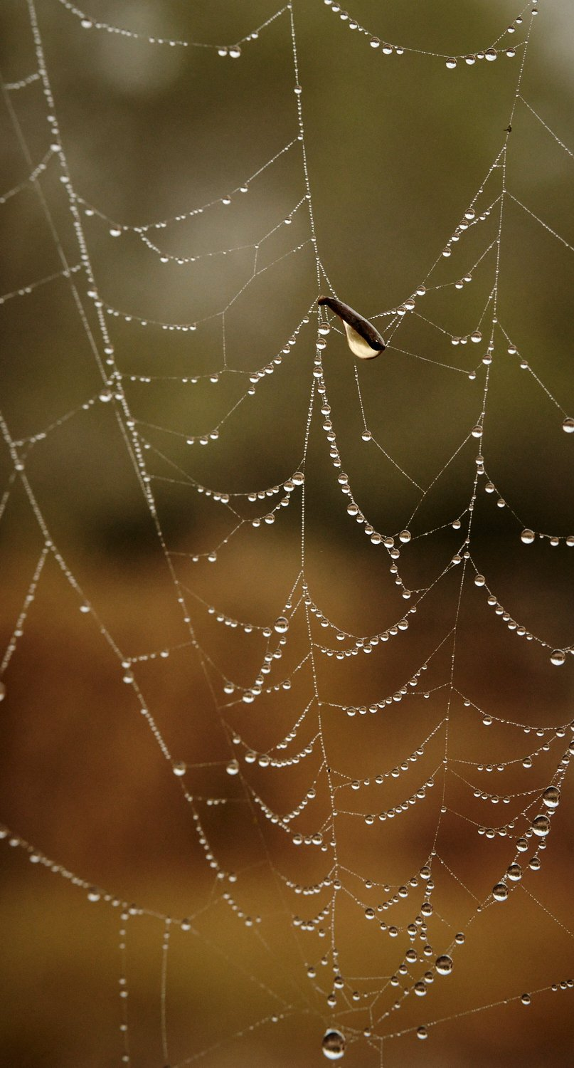 Leaf in web.jpg