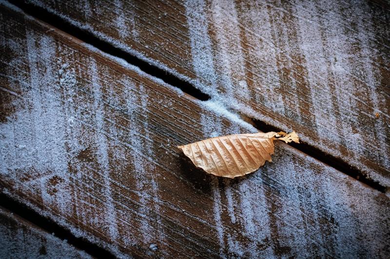 Leaf with Snow broom Marks.jpg