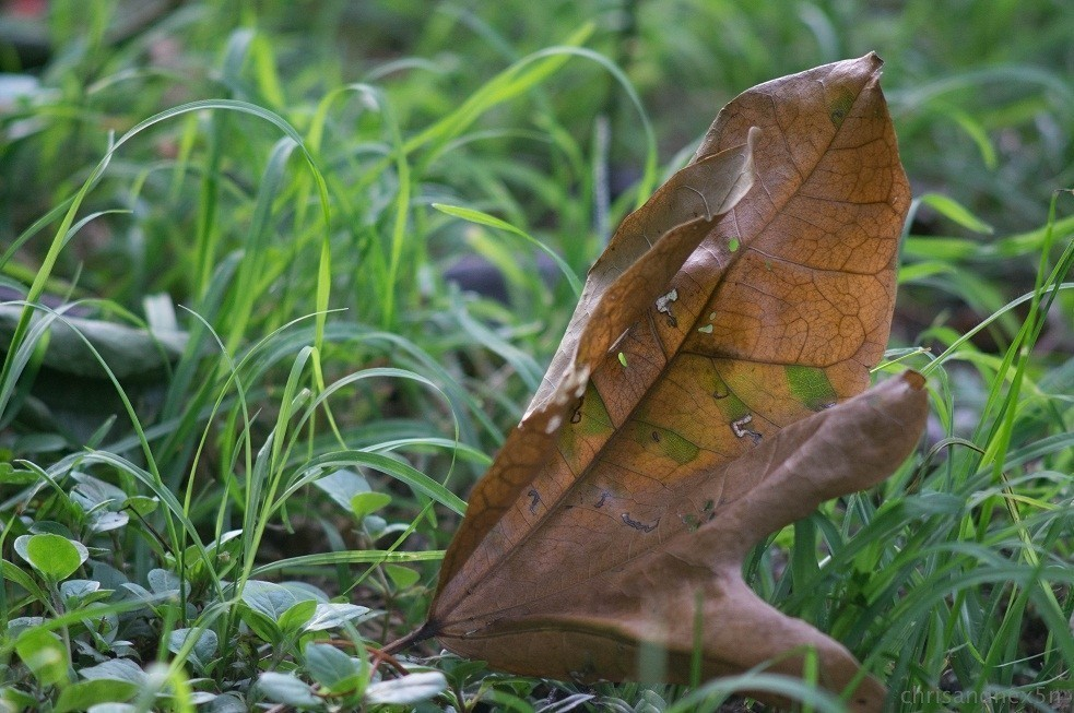 leaf1-1.jpg