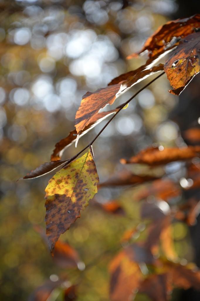 leaf1_85mm.jpg