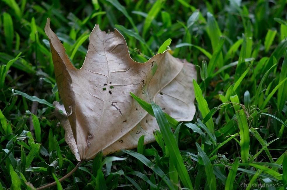 leaf2-3.jpg