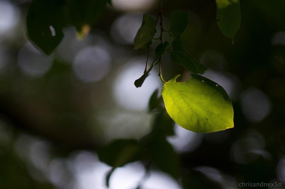 leaf2-7.jpg